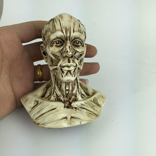 [해외]?인간의 근육 모델 페라이트 정물화 예술 참조 머리 뼈 두개골 모델 장식품을 조각 한 조경/ Human muscle model carved ferrite still life painting art reference head bust skull model orna